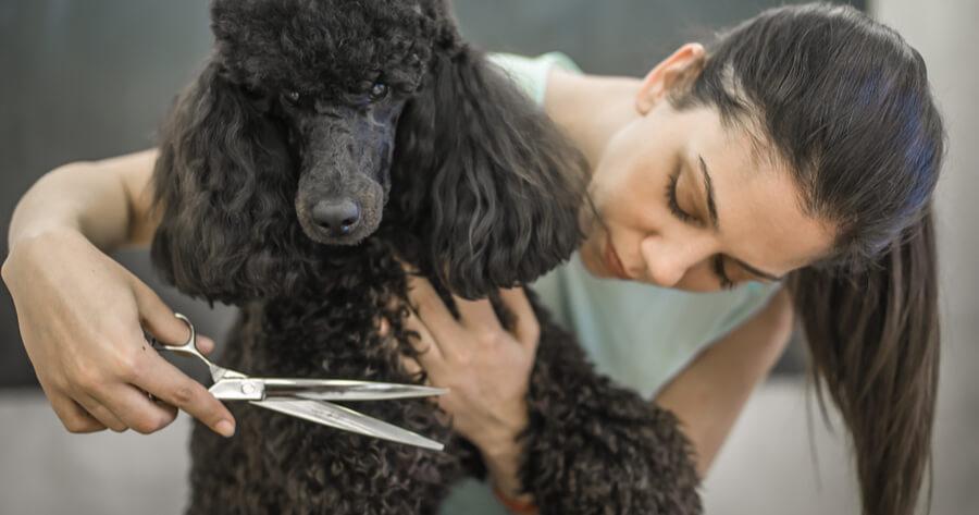donna taglia il pelo al cane