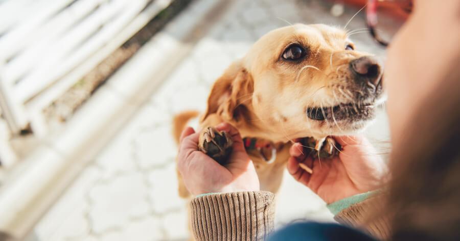 donna-accarezza-un-cane