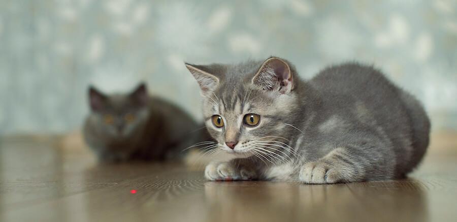 gatito juego laser