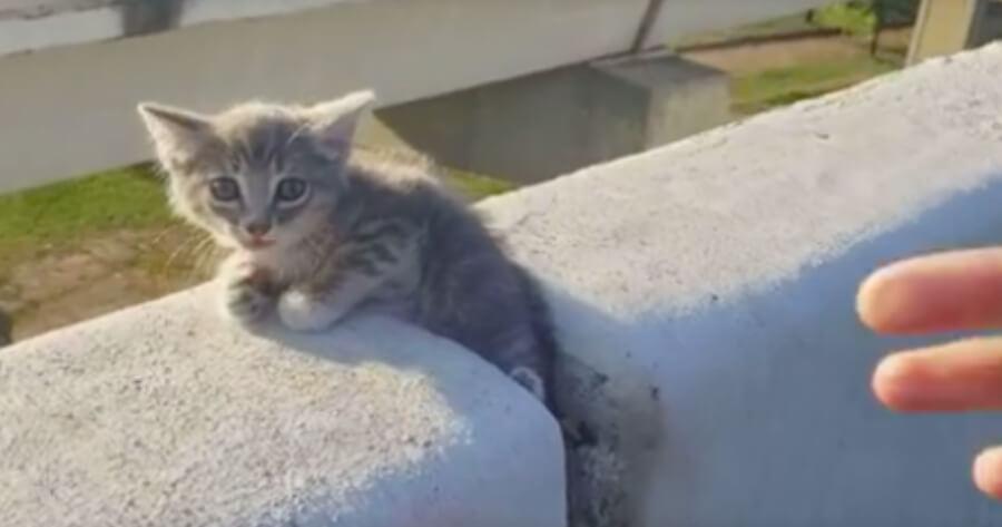gattino in autostrada