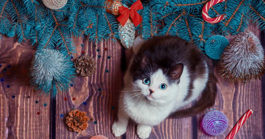 gatto-accanto-ad-albero