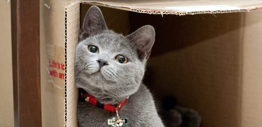 gato caja de cartón
