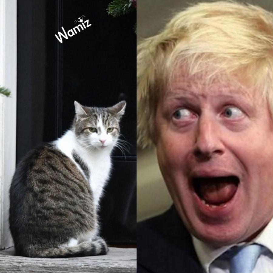 gatto e primo ministro