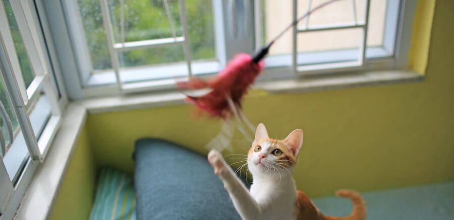 gato juega con caña de pescar