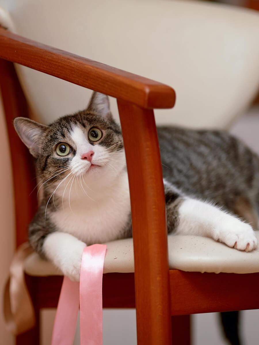 gato juega silla