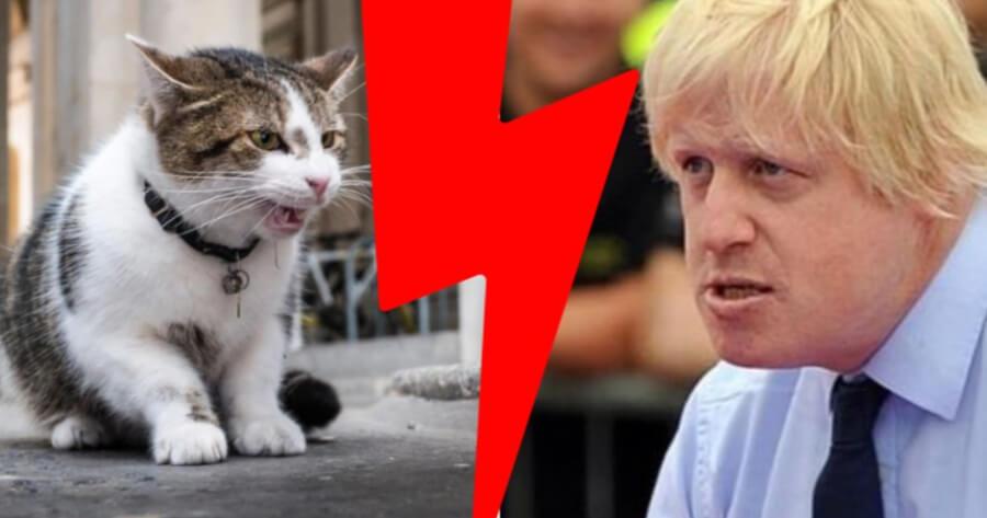 gatto Larry e primo ministro