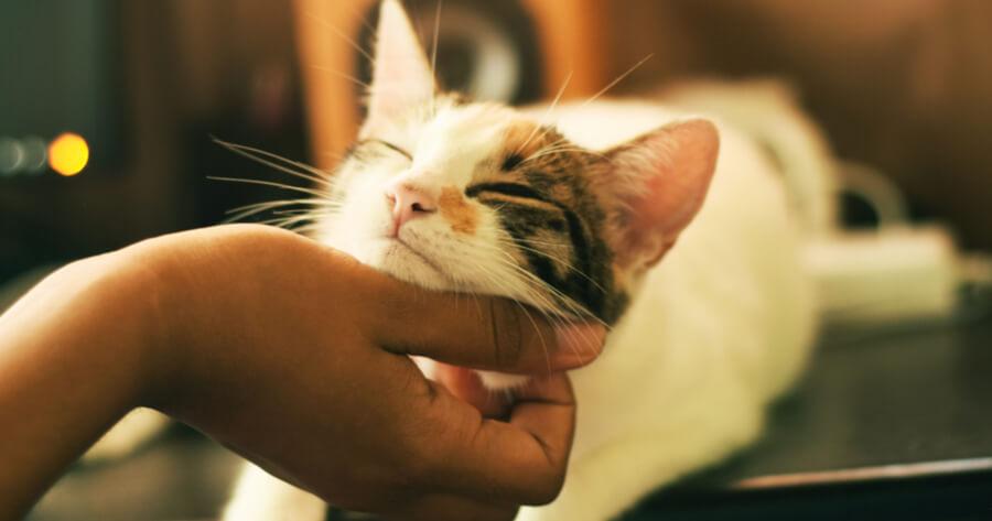gatto-si-fa-accarezzare-dal-padrone