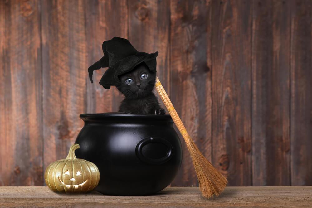 gatto-nero-ad-halloween