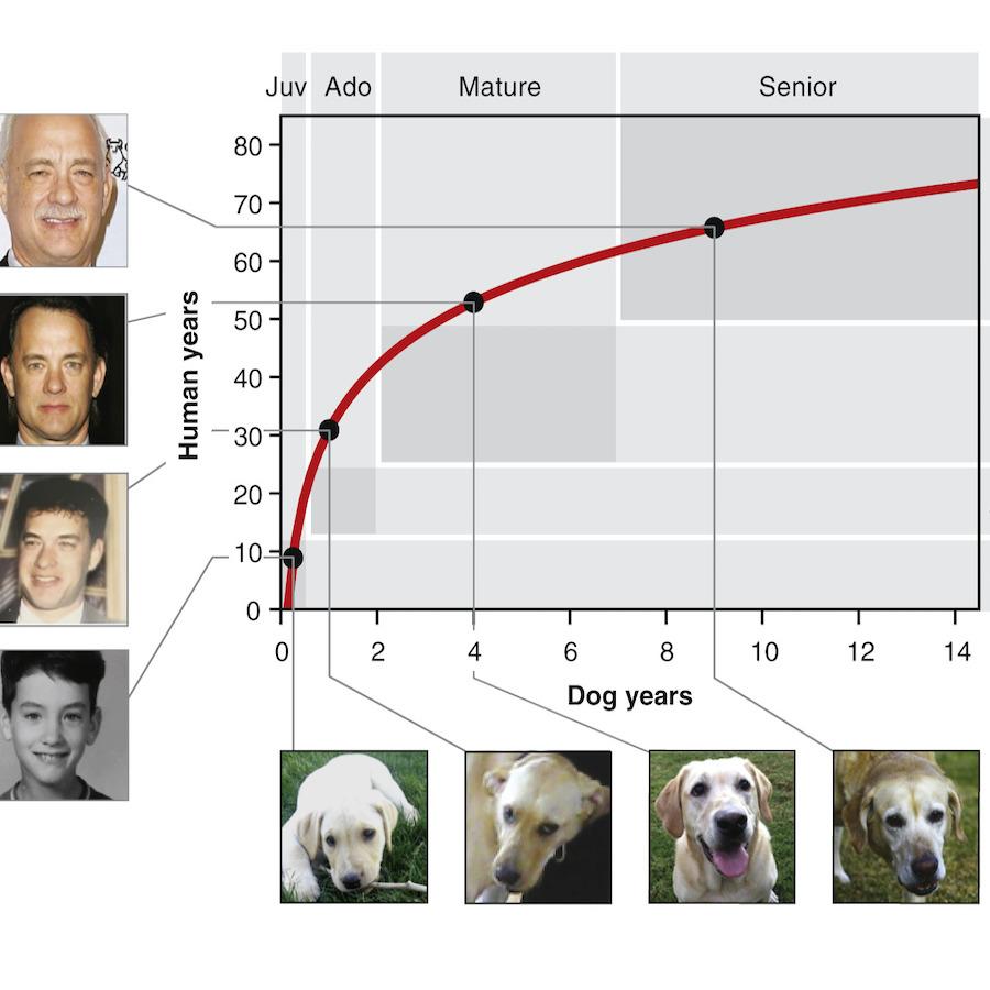 grafico età del cane