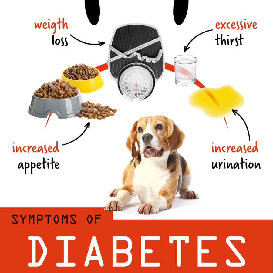 sintomi-del-diabete-nel-cane