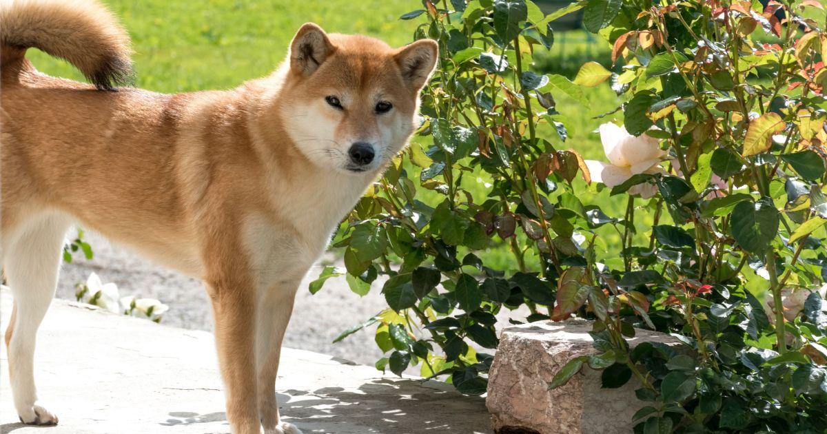 Pies w ogrodzie wśród roślin