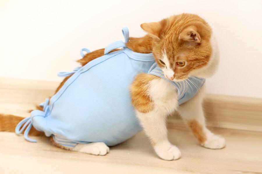 steryklizacja kota