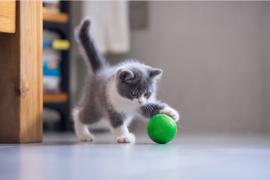 kotek się bawi piłką