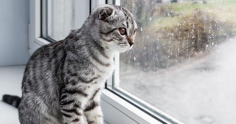 kot patrzy na deszcz