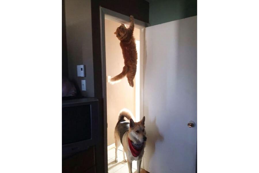 Kot wiszący na framudze
