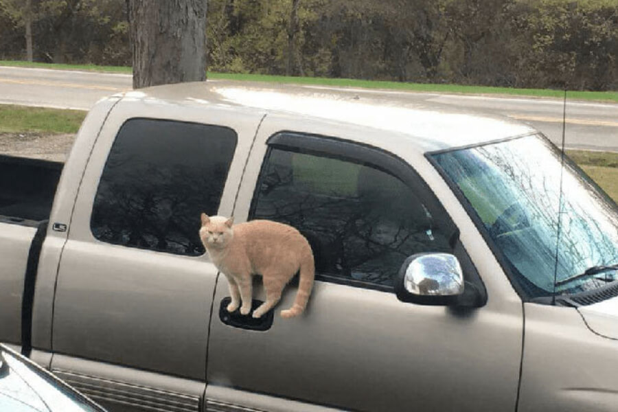 Kot na klamce od auta
