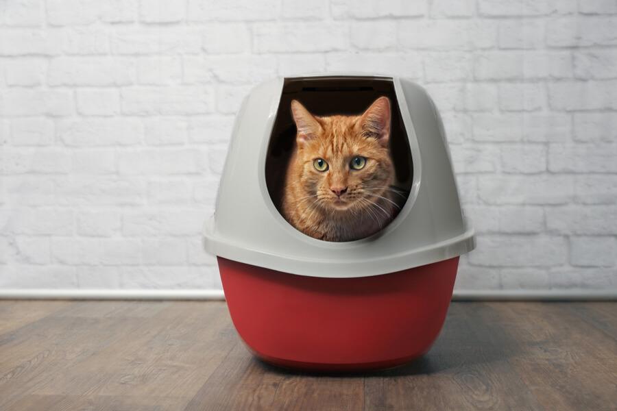 kot w zamkniętej kuwecie