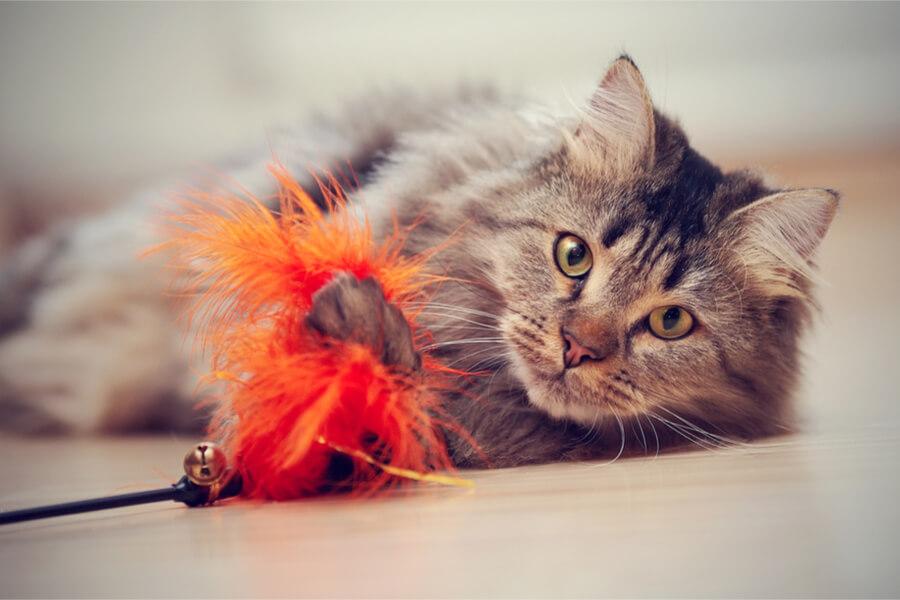 Kot  z puszkiem