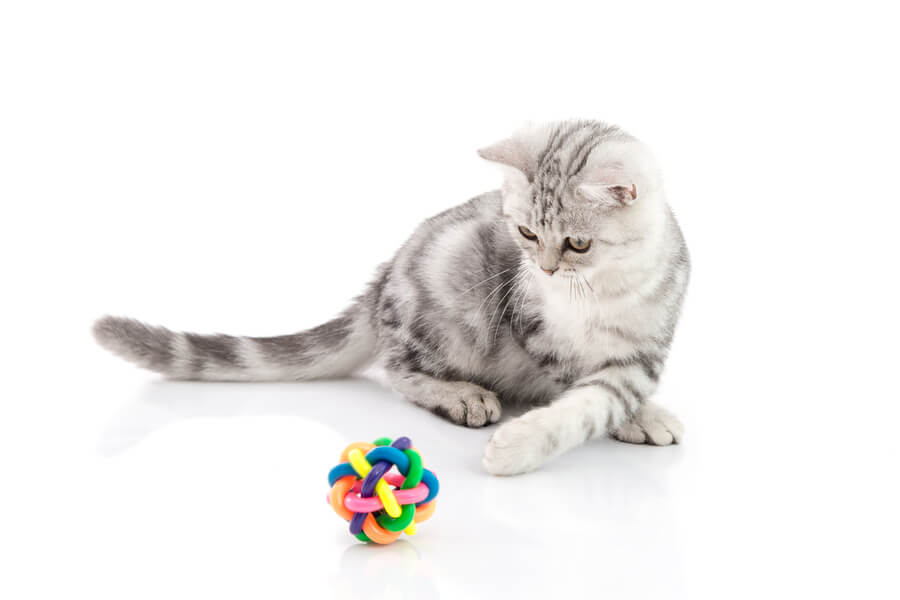 kot z piłeczką