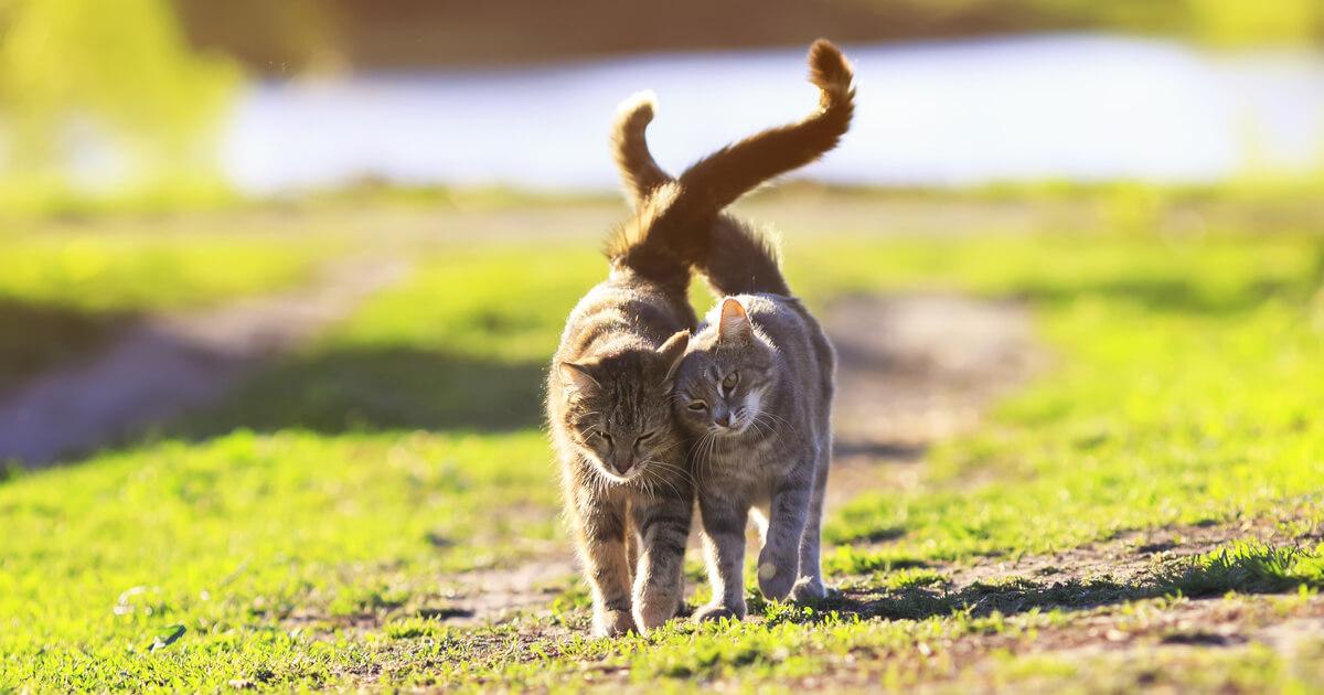 kocie ocieranie