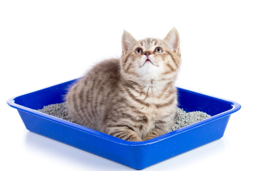 mały kotek w kuwecie