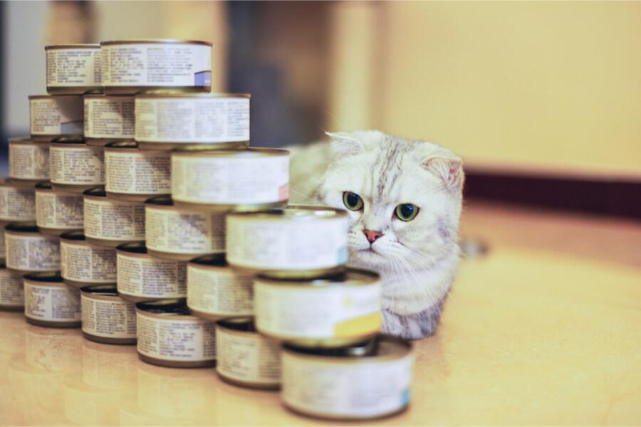 Tuńczyk z puszki dla kota
