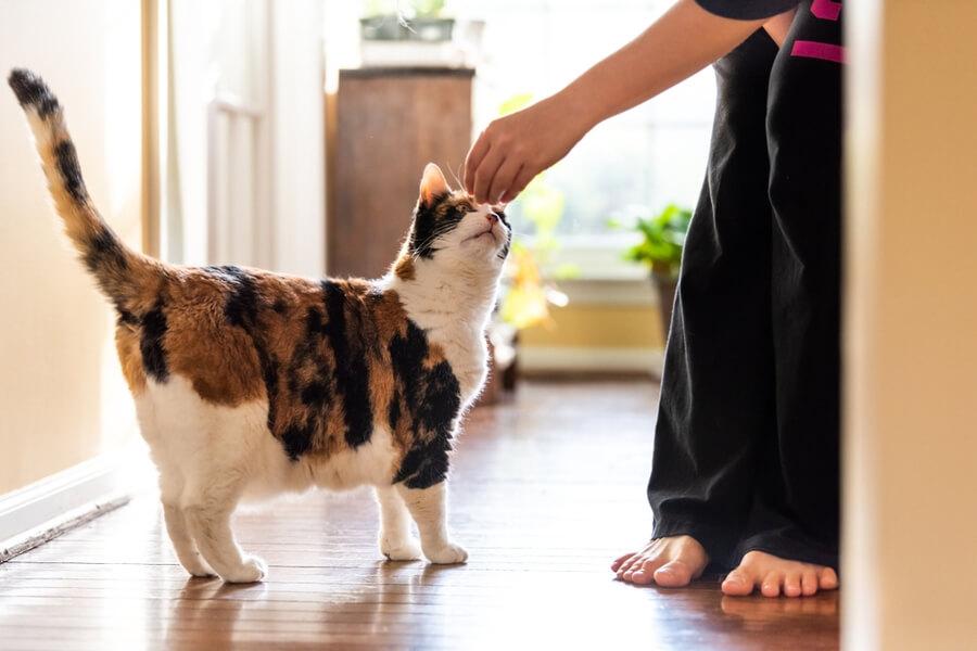 panie daje kotu przysmak