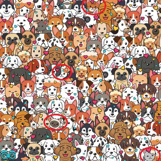 Czy potrafisz odnaleźć 4 koty pośród tylu psiaków?