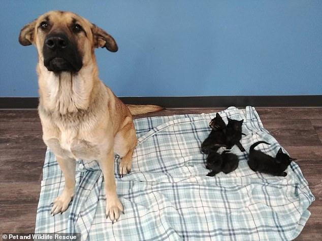 pies i kocieta