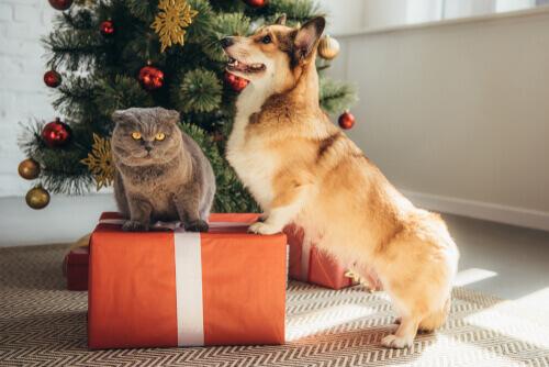 prezent dla psa i kota