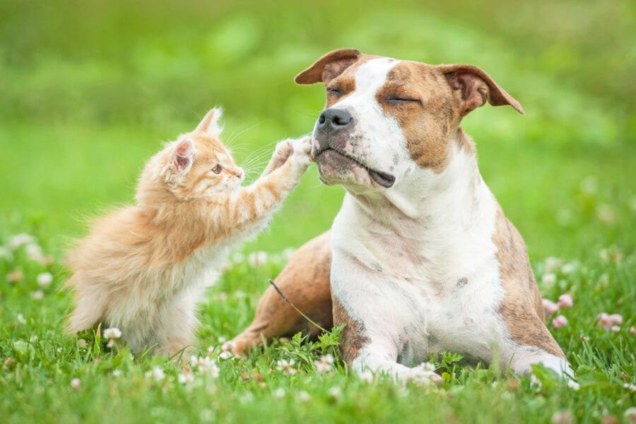 kotek bawi się z psem