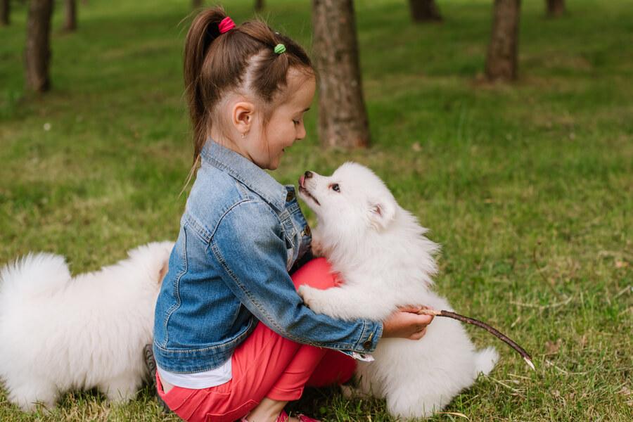 dziewczynka z psem pomsky