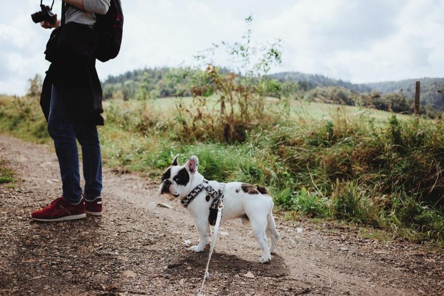 maly pies w górach