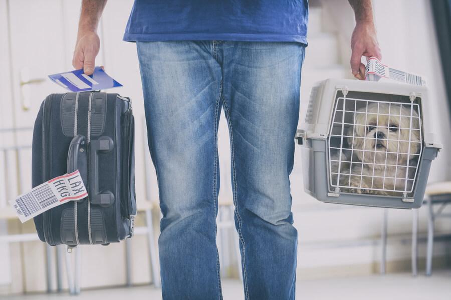 pies w transporterze na lotnisku