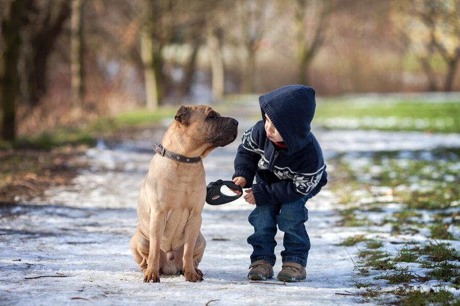 mały chłopiec na spacerze z psem w deszczu
