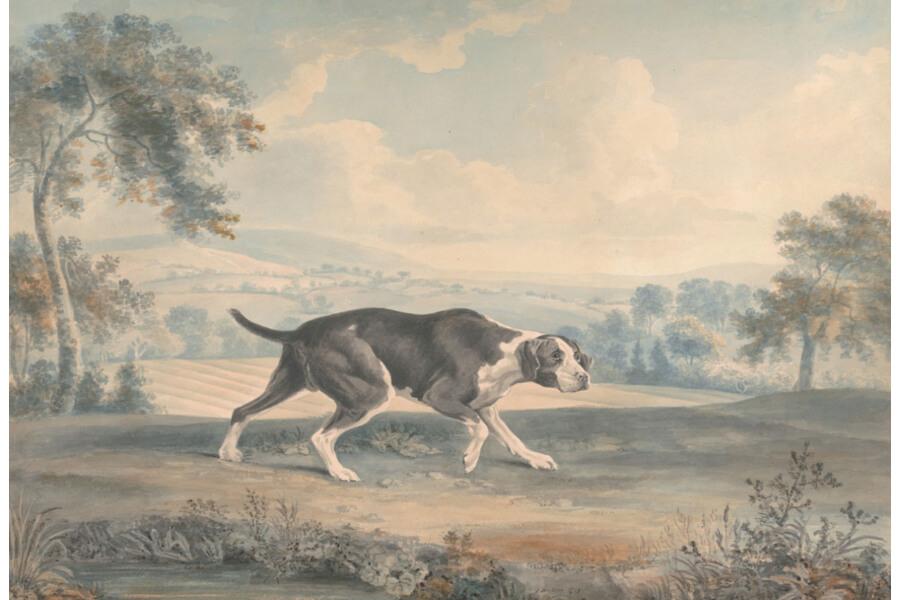 Old spanish dog
