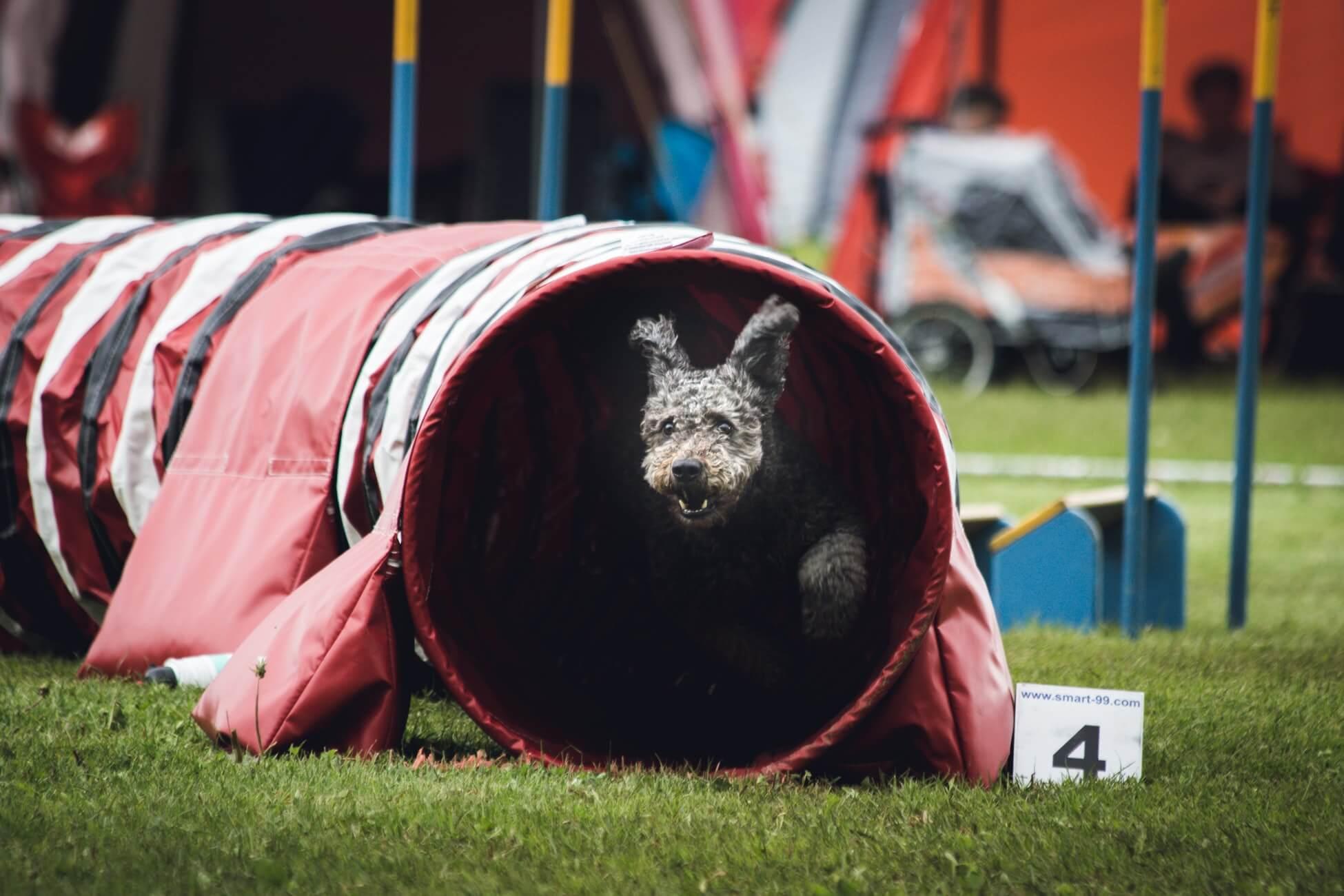 pies w tunelu