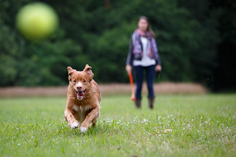 pies na spacerze lapie piłkę