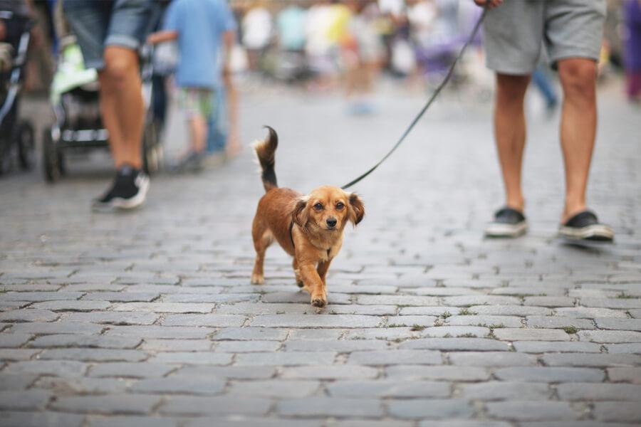 Spacer z psem w mieście