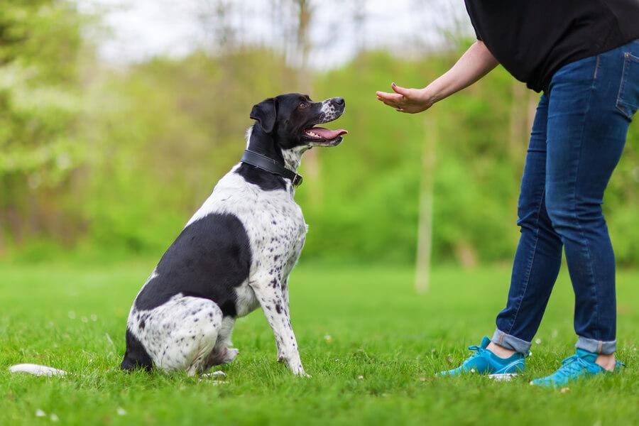 komenda dla psa