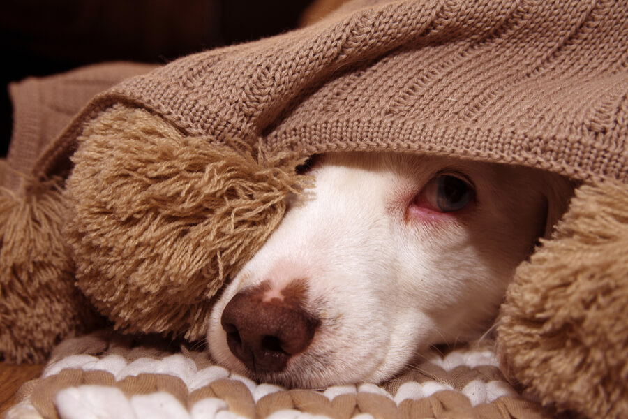 przestraszony-pies