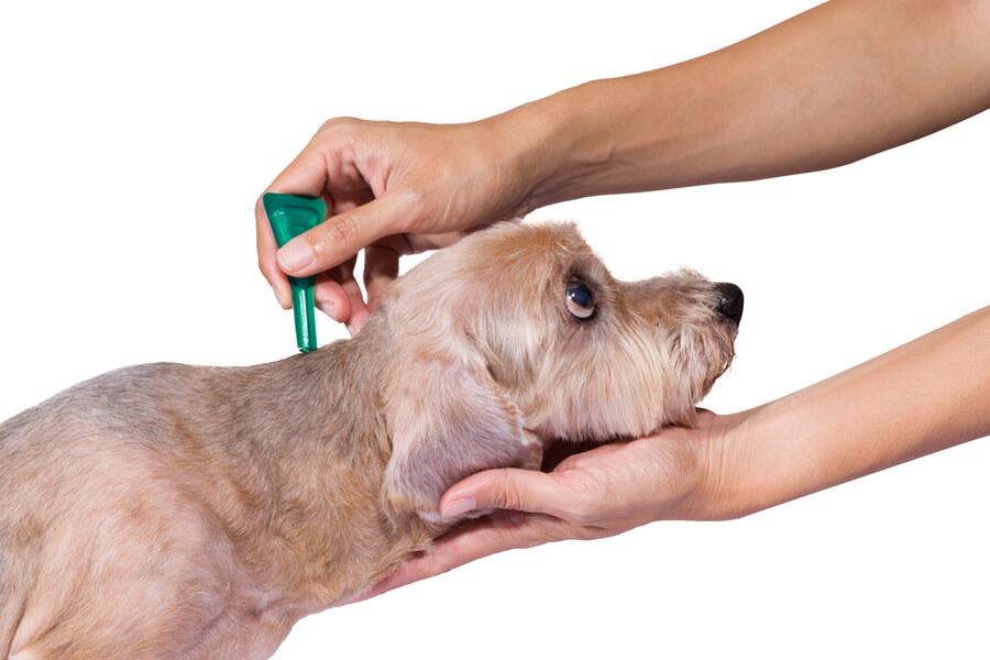Preparat na kleszcze dla psa