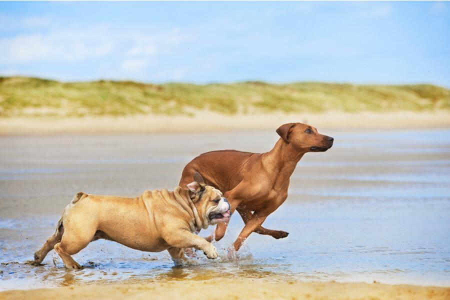 dwa psy nad wodą na plaży