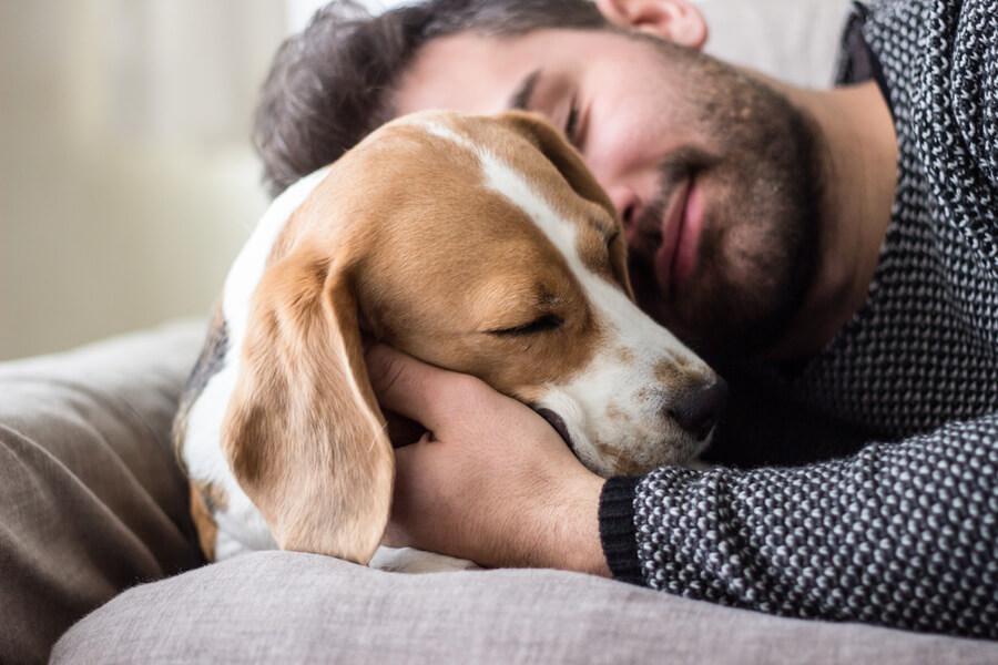 pies sie przytula