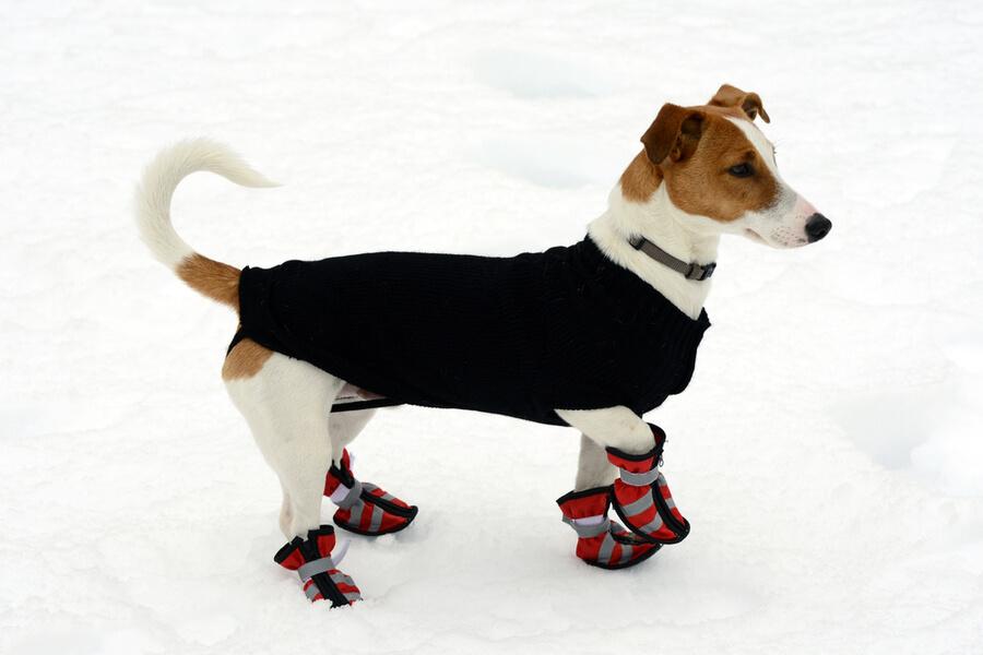 pies w butach zimą