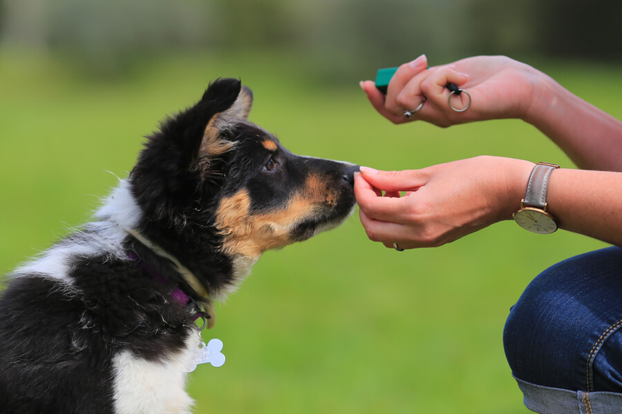Kliker dla psa i smakołyk