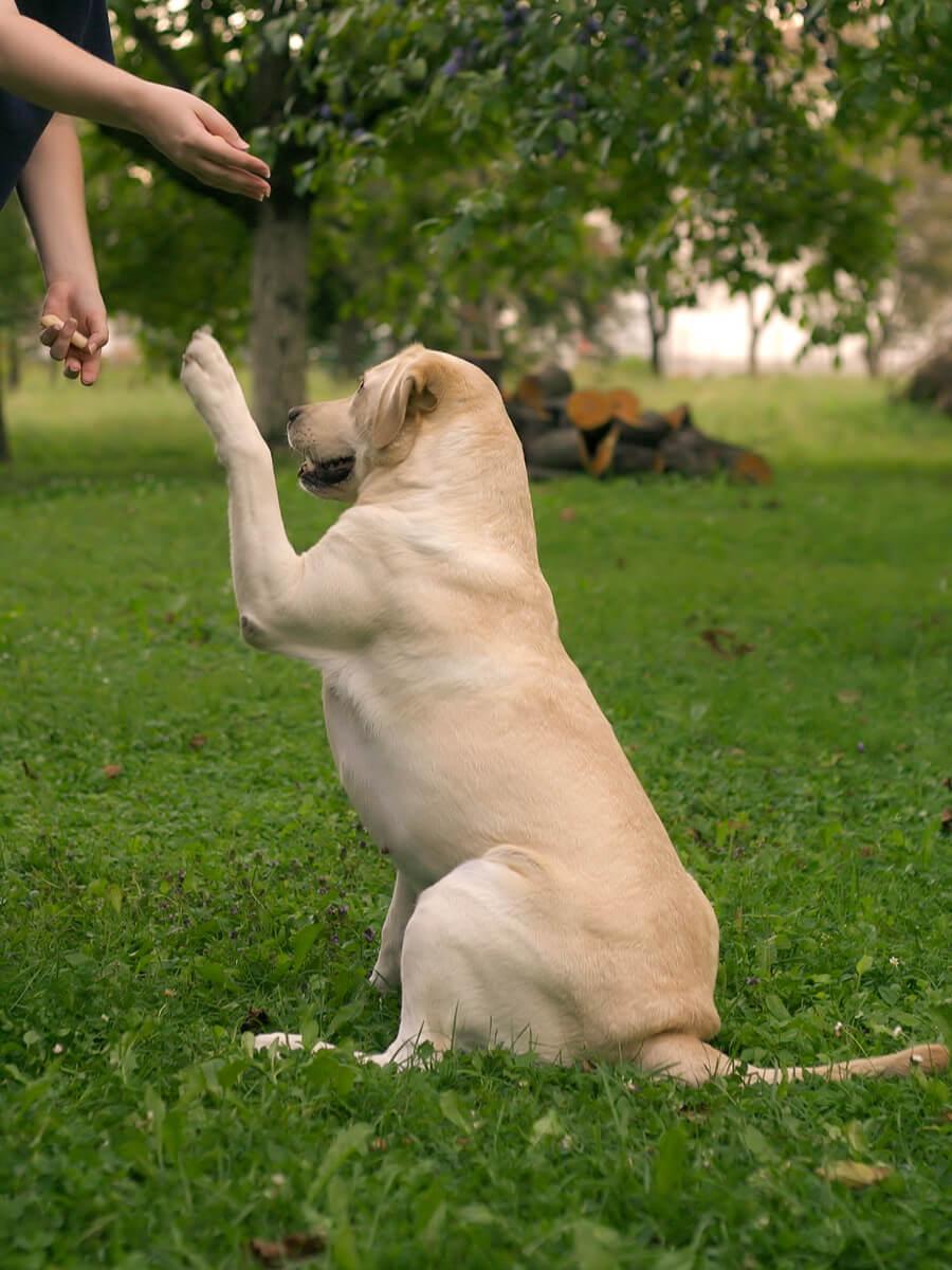 pozytywne szkolenie psa