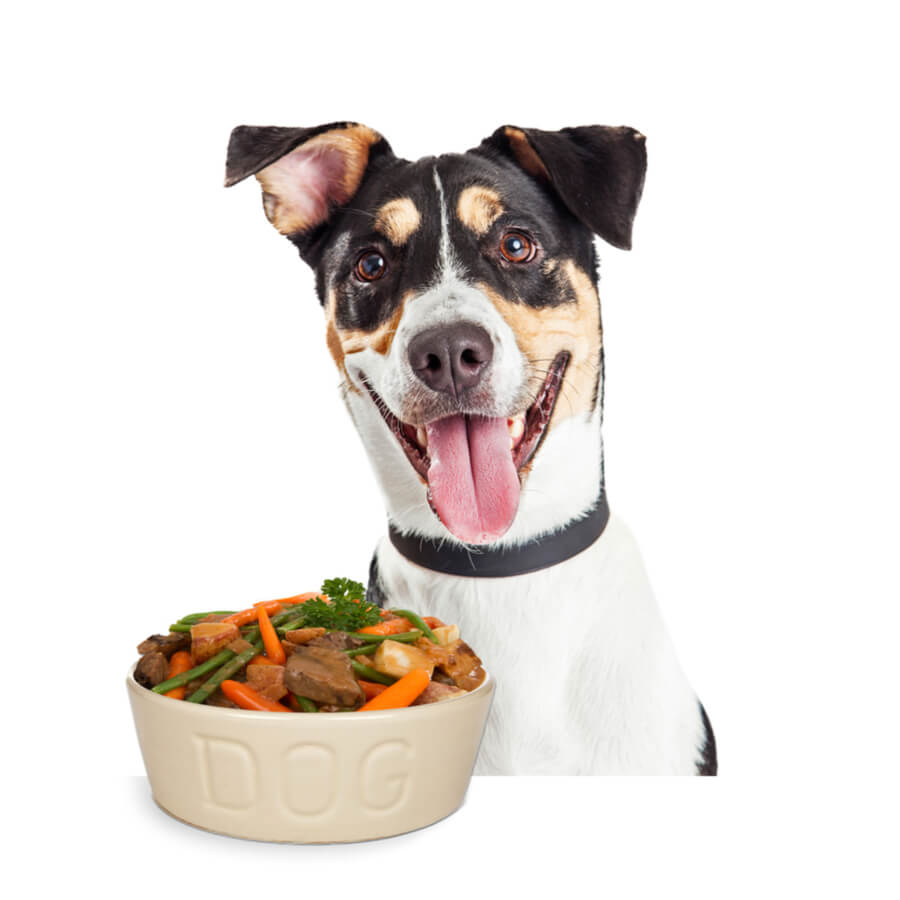 domowe jdzenie dla psa