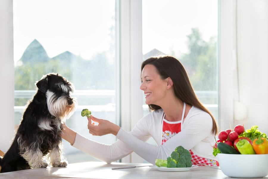 kobieta podaje psu brokuł