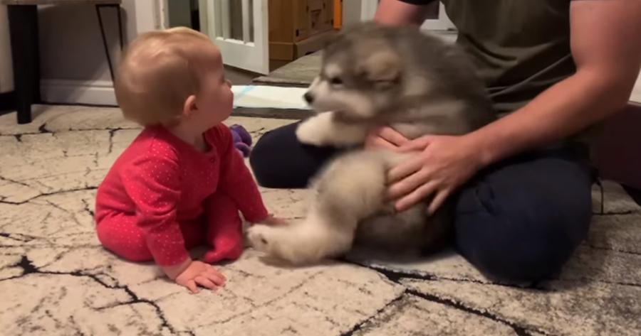 bebe y cachorro se miran